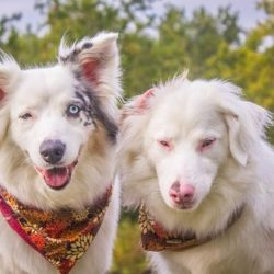 special needs dogs