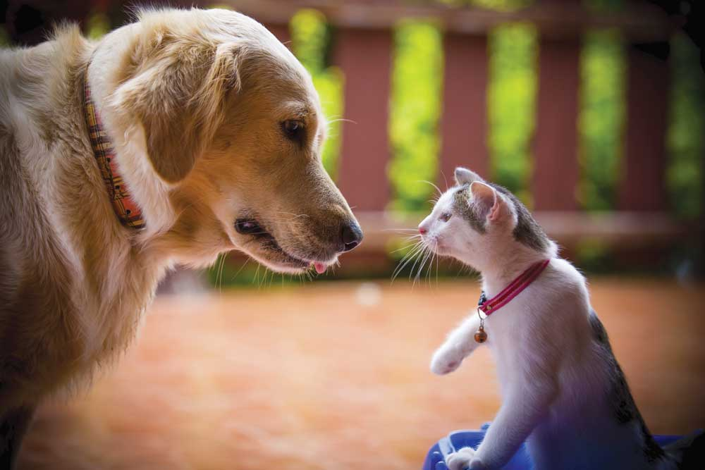 how to introduce cats and dogs