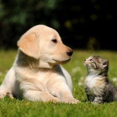 How To Introduce Cats and Dogs – Guide For Pet Owners