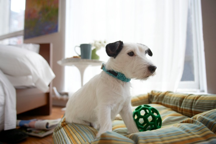 introduce a new dog to a new home