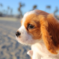 Introduce A New Dog To A New Home – 4 Useful Tips